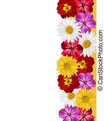 barwny, matczyny, concept., flowers., wektor, tło, święto, dzień