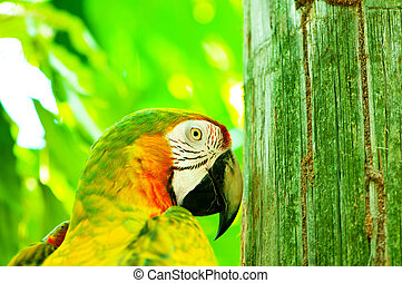 barwny, papuga, ptak, posiedzenie, na, przedimek określony przed rzeczownikami, grzęda