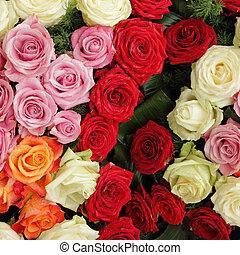 barwny, tło, róże, dużo