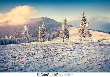 barwny, zima, wschód słońca, w, przedimek określony przed rzeczownikami, góry.