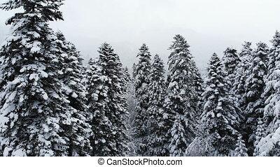 bas, branches, vue, neigeux, sur, chute neige, voler, ...
