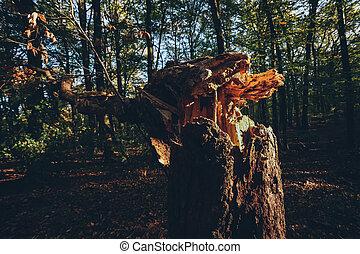 bas, frappant, arbre, forêt automne, blowed, sunlight.