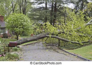 bas, frappe, arbre, orage