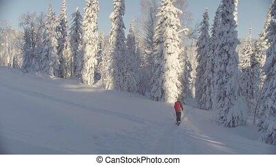 bas, neigeux, siberia., skitour, forest., colline, équitation, homme