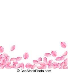 bas., sakura, rose, clair, pétales, tomber, romantique, b