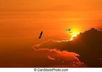 bas, soleil, oiseau volant, va