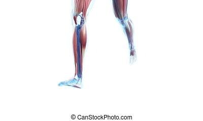 basculador, con, visible, músculos