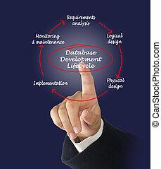 base dados, desenvolvimento, lifecycle