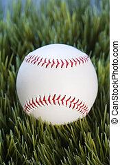 Baseball in grass.