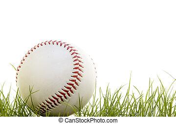 baseball in the grass