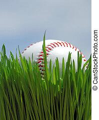 baseball on grass