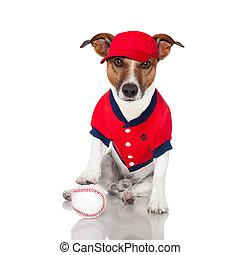 basebol, cão