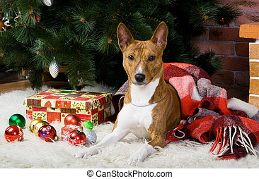 Brindle Basenji with christmas-tree and other decorations.