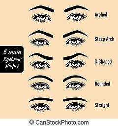 Basic eyebrow shape types vector illustration - 5 basic...