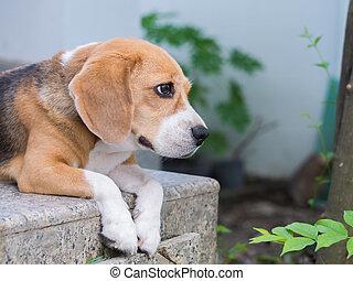 basierend, beagle