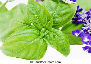 Basil and flowering sage