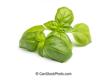 Basil. - Basil isolated on the white background.