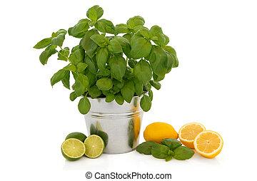 Basil Herb and Citrus Fruit