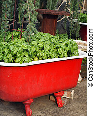 Basil Herb Container Garden