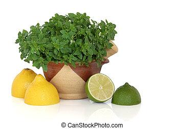 Basil Herb with Lemon and Lime Fruit