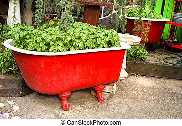 Basil in a Red Bathtub