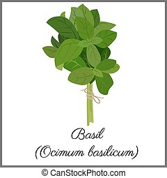 Basil isolated on white top view