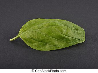 Basil leaf on black