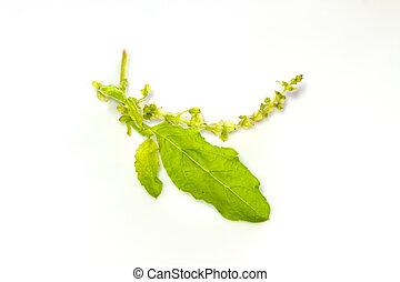 basil leaves on white