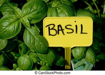 Basil - Nature, colors, flora, flowers, green, market, plant