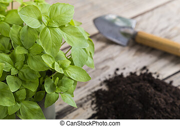 Basil plant with compost and trowel