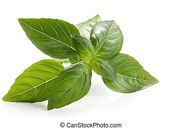 Basil sprig, reflected on white surface. Close-up view of ...