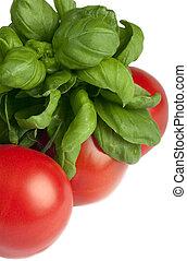 Basilic and tomatoes isolated on white