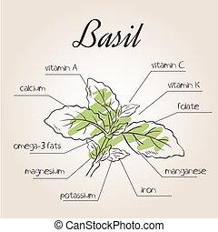 basilicum, voedingsmiddelen, vector, lijst, illustratie