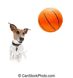 basket-ball, russell, chien, cric