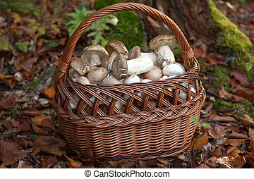 Basket filled with mushrooms in a forest