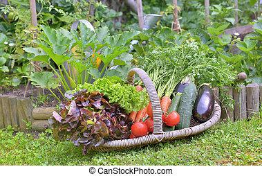 basket full of freshness vegetables put on the grass in front of a vegetable garden