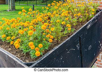 basket full of orange carnations flowers side view