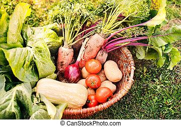 Basket full of vegetables in the backyard garden.