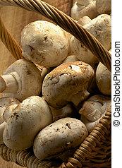 Basket of Champignons