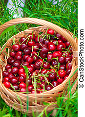 Basket of cherries on a grass