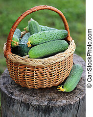 basket of cucumbers on a stump.