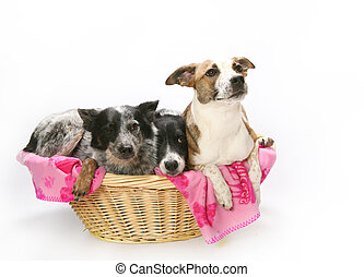 Basket of Dogs