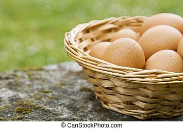 basket of eggs in the field