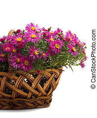 Basket of flowers on a white background