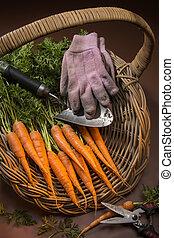 Basket of Fresh Organic Carrots