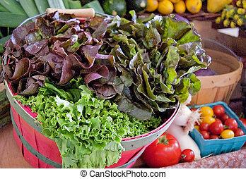Basket of Fresh Organic Lettuce