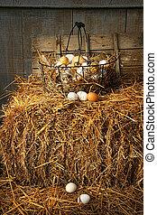 Basket of freshly laid eggs lying on straw