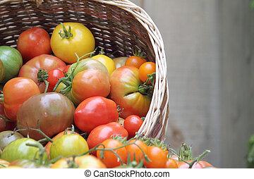 basket of heritage organic tomatoes