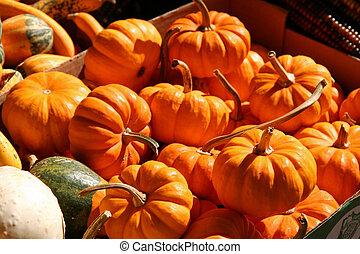 Basket of Holiday Pumpkins