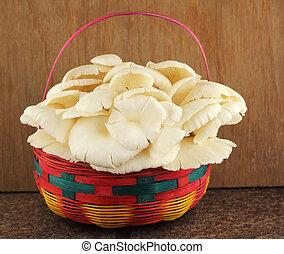 Basket of mushrooms in kitchen